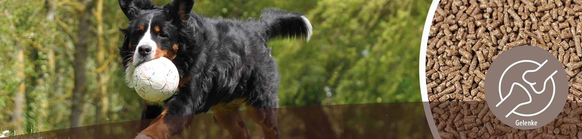 Hund - Unterkategorie - Gelenke