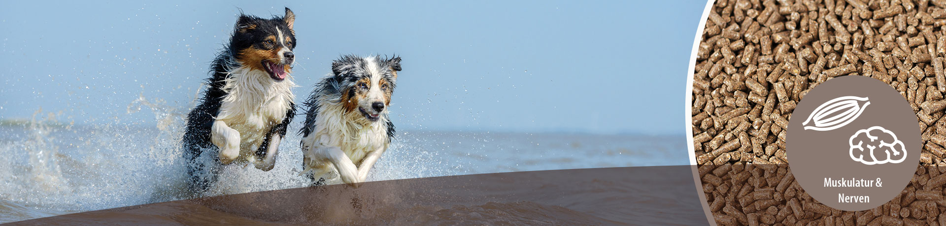 Hund - Unterkategorie - Muskulatur-Nerven