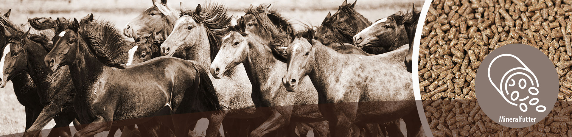 Pferd - Unterkategorie - Mineralfutter