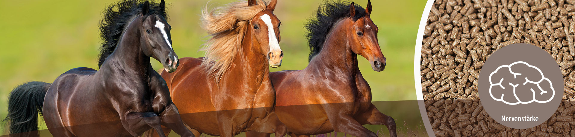 Pferd - Unterkategorie - Nervenstärke