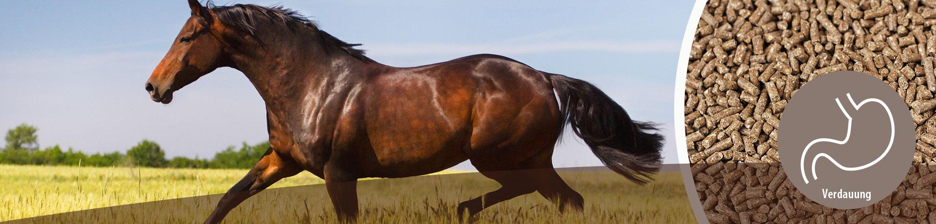 Pferd - Unterkategorie - Verdauung