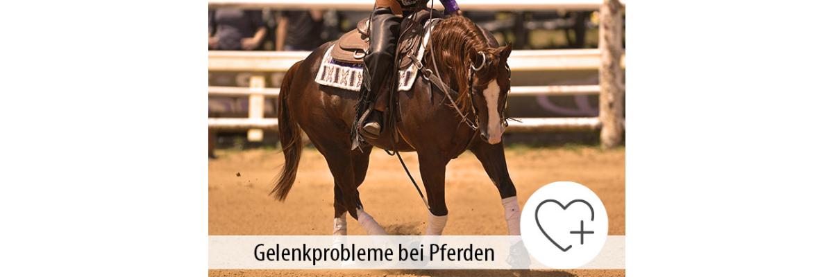 Gelenkprobleme bei Pferden - Gelenkbeschwerden bei Pferden - Ratgeber zur Fütterung