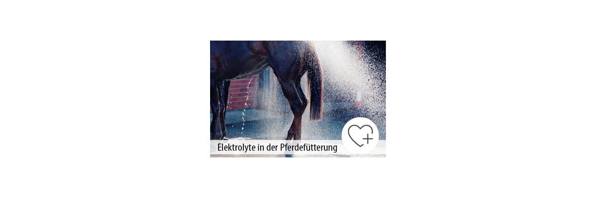Elektrolyte in der Pferdefütterung - Elektrolyte in der Pferdefütterung - MIGOCKI Tierernährung