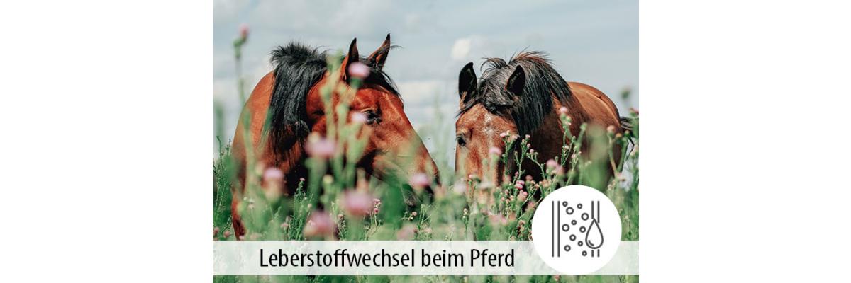 Der Leberstoffwechsel bei Pferden - Der Leberstoffwechsel bei Pferden - MIGOCKI Tierernährung