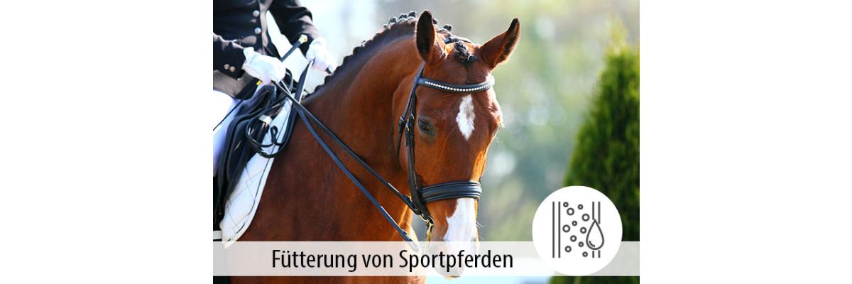 Die Fütterung von Sportpferden - Die Fütterung von Sportpferden - MIGOCKI Tierernährung