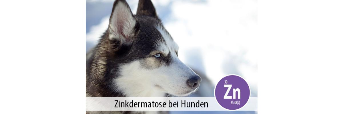 Ernährungsbedingte Zinkdermatose - Gendefekt bei Bullterrier, Siberian Husky und Alaskan Malamute