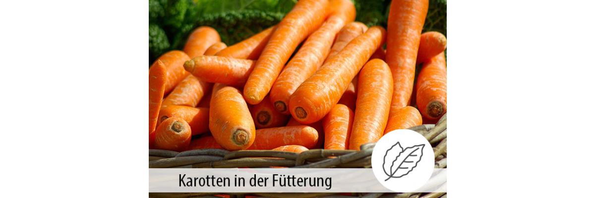KAROTTEN - Natürlicher Ballaststoff- und Vitaminlieferant - Karotten für Pferde:  Ballaststoffe und Vitamine - MIGOCKI Tierernährung