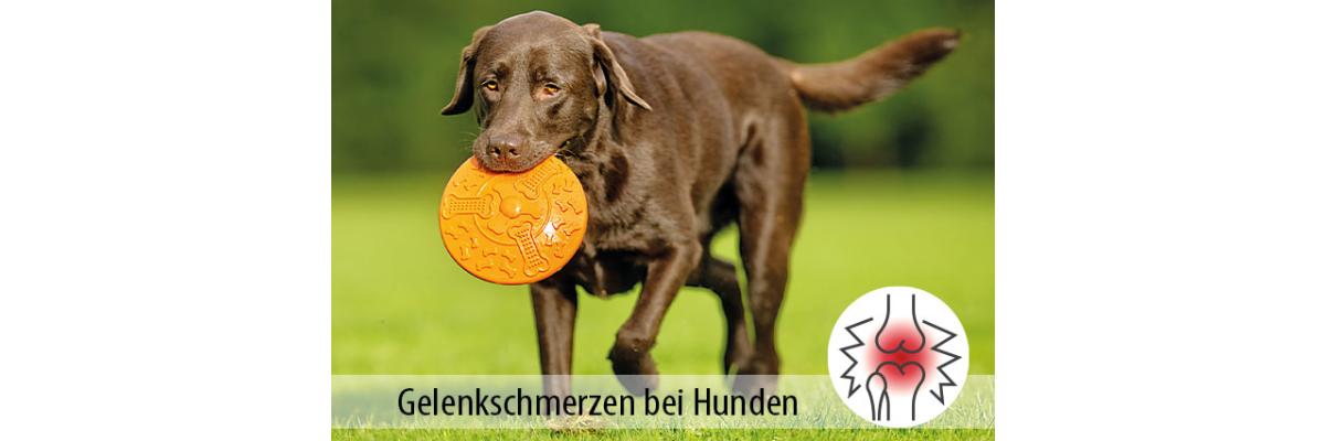 Typische Gelenkbeschwerden bei Hunden - Gelenkbeschwerden bei Hunden - Tipps für den Hundebesitzer