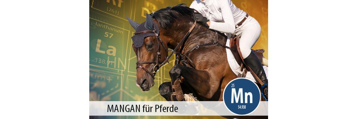 MANGAN für Pferde: ein unterschätztes Spurenelement - Mangan für Pferde - ein unterschätztes Spurenelement