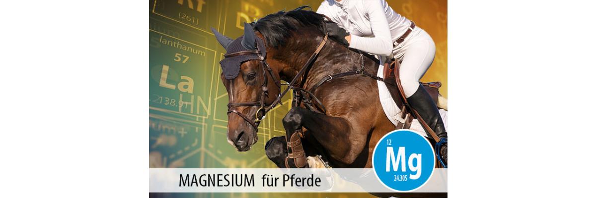 MAGNESIUM für Pferde: der Mineralstoff für Muskulatur und Gelassenheit - Magnesium für Pferde - der Mineralstoff für Muskulatur und Gelassenheit