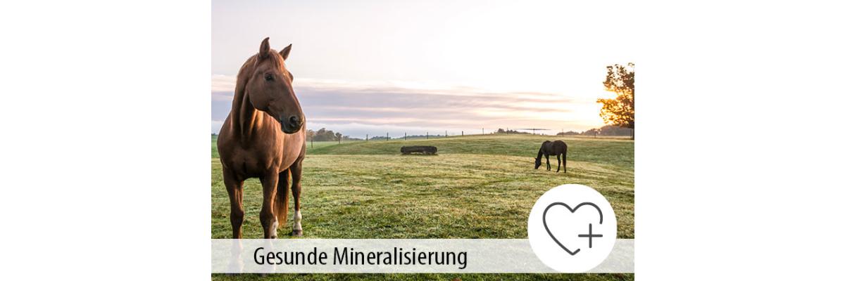 Die gesunde Mineralisierung von Pferden - Die gesunde Mineralisierung von Pferden - MIGOCKI Tierernährung