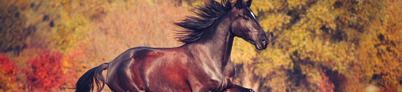 Fütterung Pferde im Herbst