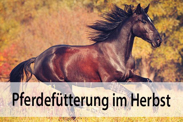 Pferdefutter Herbst Migocki