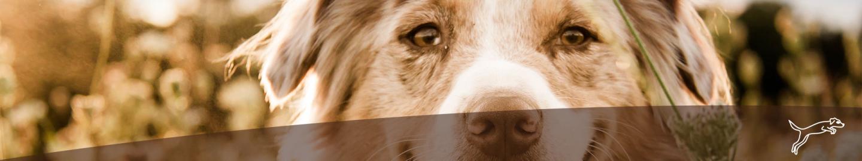 MIGOCKI Hundefutter Nahrungsergänzungen