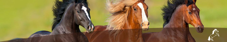 MIGOCKI Pferdefutter