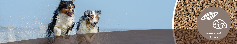MIGOCKI Hundefutter Muskulatur und Nerven