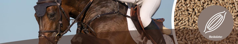 MIGOCKI Pferdefutter für Muskelaufbau