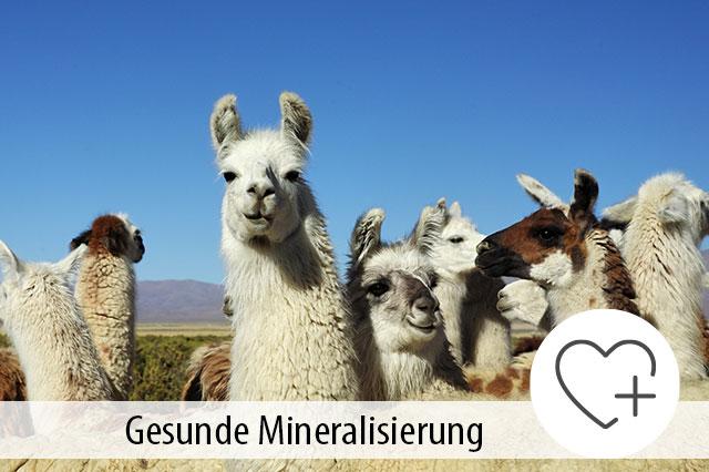 Ratgeber Mineralien für Alpakas und Lamas