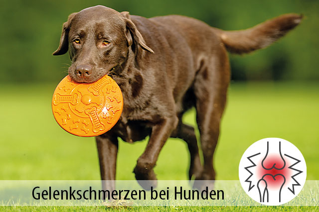 Ratgeber Gelenkschmerzen Hunde