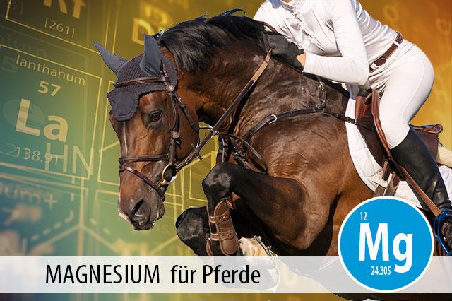 Ratgeber Magnesium für Pferde