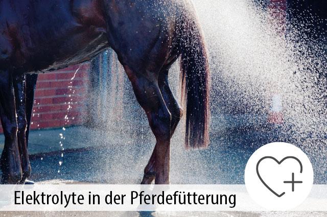 Rategeber Elektroylte für Pferde
