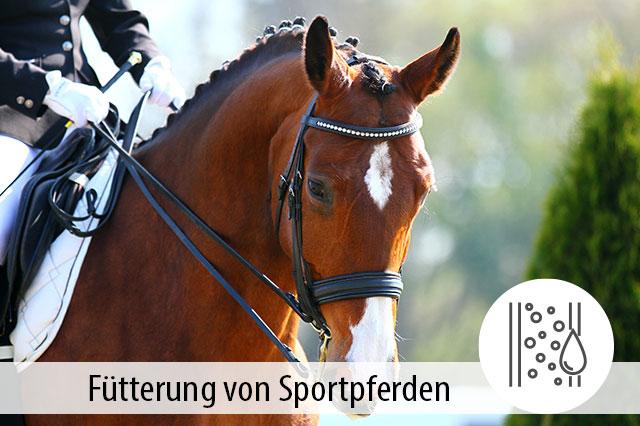 Ratgeber Fütterung von Sportpferden