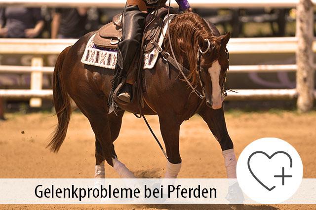 Ratgeber Gelenkprobleme Pferde