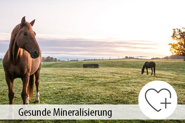 Ratgeber Mineraliserung Pferdefutter