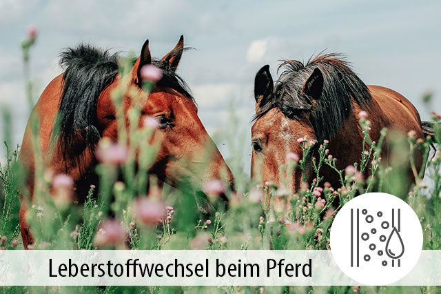 Ratgeber Leberstoffwechsel Pferde