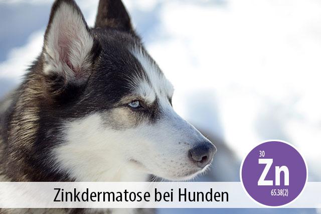 Ratgeber Zink für Hunde Hautprobleme