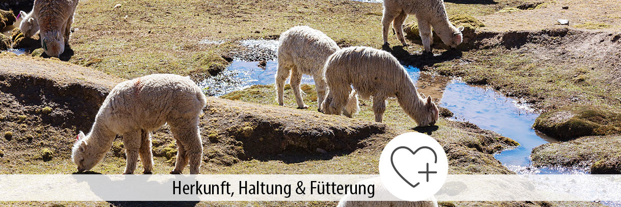 Ratgeber Alpaka Haltung Herkunft Fütterung