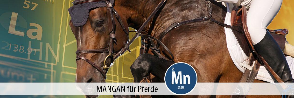 Ratgeber Mangan für Pferde