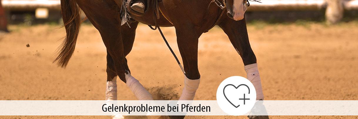 Ratgeber Gelenkschmerzen Pferde
